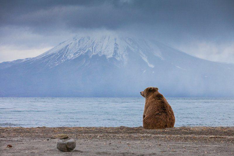Бурый медведь, Камчатка, Курильское озеро Дзенphoto preview