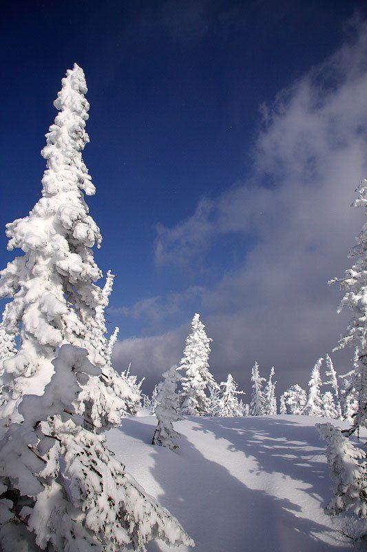 зима светотеньphoto preview