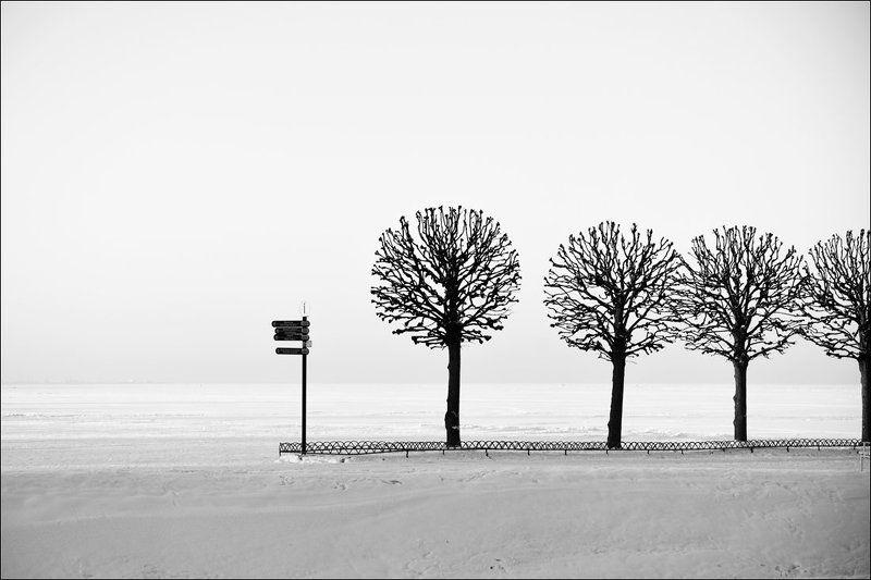 Графика, Деревья, Зима, Петергоф, Чёрно-белое В едином строюphoto preview