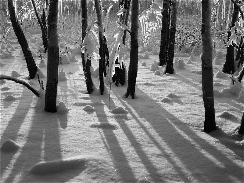 Деревья, Зима, Снег, Сосульки, Тени, Чёрно-белое В зимнем лесуphoto preview