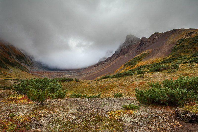 Вачкажец, Горы, Камчатка, Тундра Высокогорная тундраphoto preview