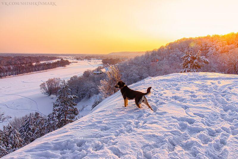 пейзаж, природа, красота, свет, зима, холод, мороз, Россия, собака Верный друг.photo preview