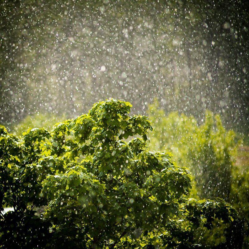 rain Rainyphoto preview