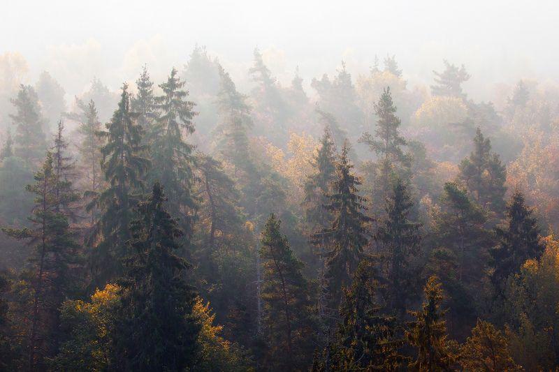 Вспоминая осень.photo preview
