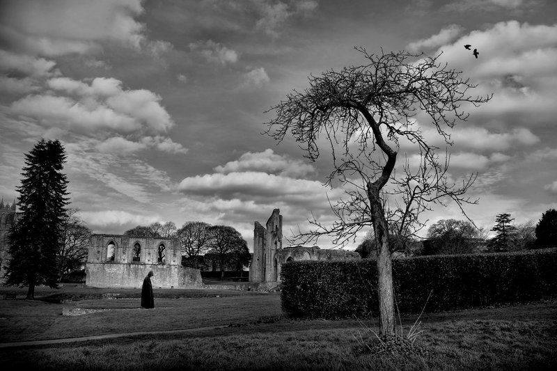 Glastonbury Abbey...photo preview