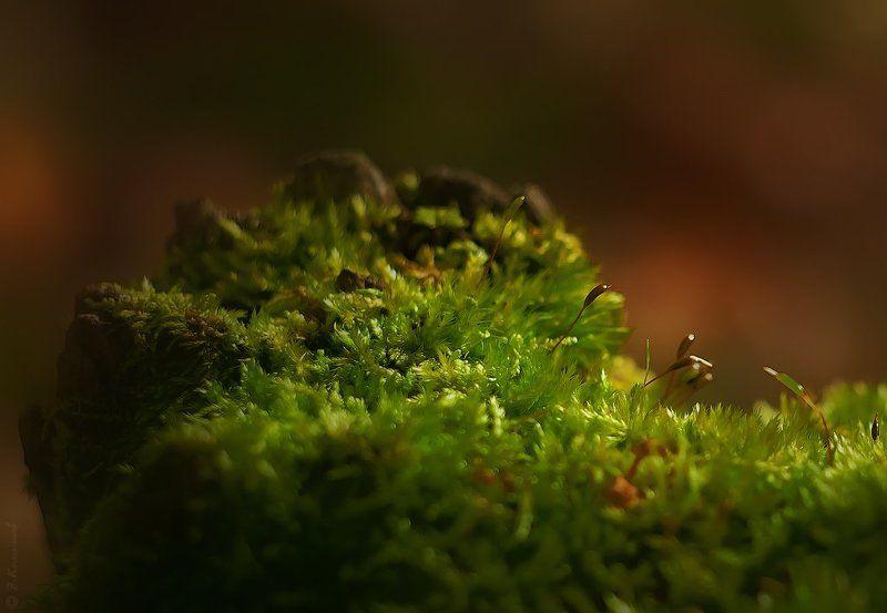 Лес, Лето, Мох, Природа, Свет, Утро Утренние грёзы...photo preview