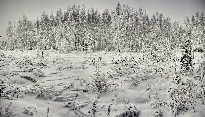 лес, снег, панорама cold forestphoto preview