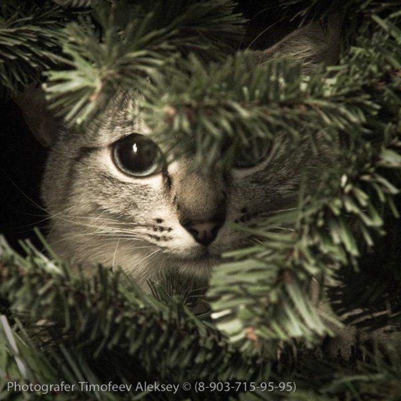 кошка, елка Тиграphoto preview