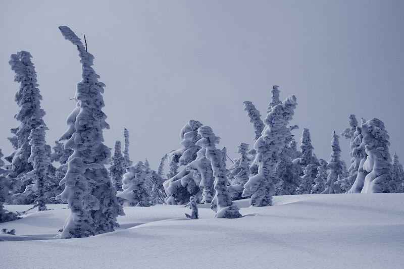 в зимнем снеphoto preview
