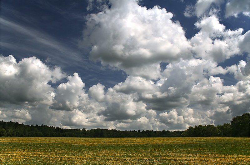 природа, пейзаж, небо Под небом голубым есть поле золотоеphoto preview