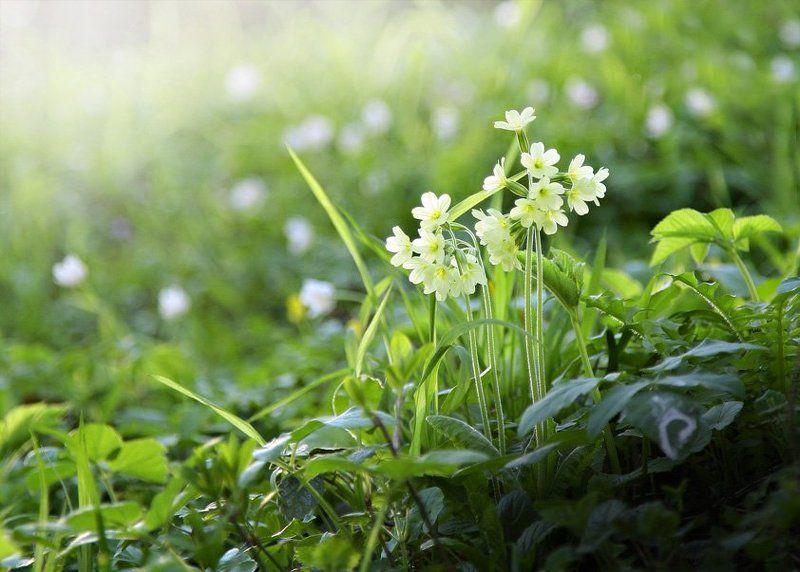 луг, весна, солнце, зелень, тепло, цветы весенние сныphoto preview