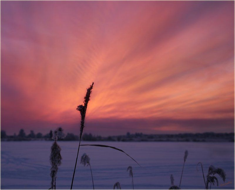 тверская область, волга,  конаково, закат, травинка, мороз photo preview