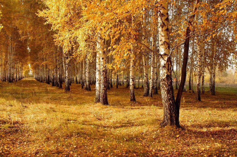 andrew ivanov, Russia