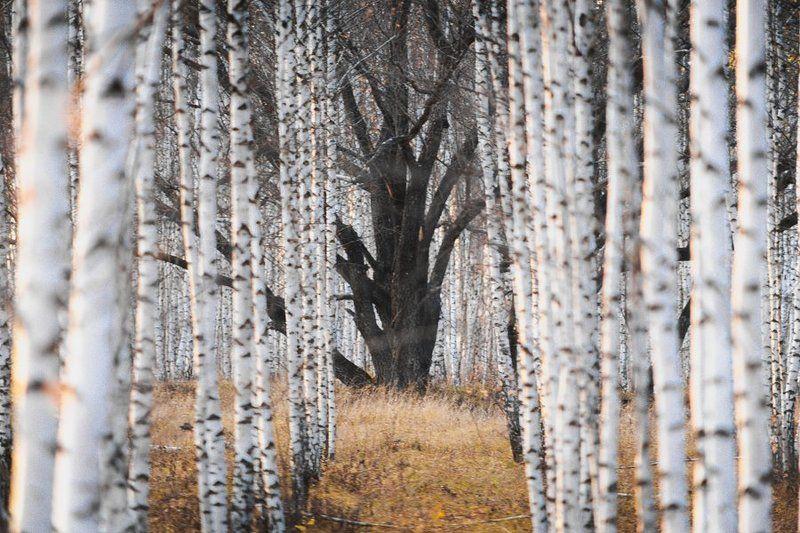 treesphoto preview