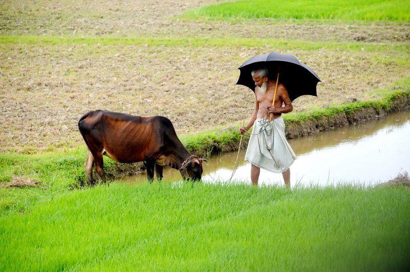 Masud, Bangladesh