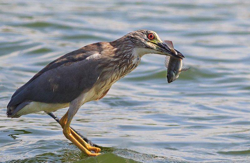 А вам слабО поймать такую рыбу!!!!!photo preview