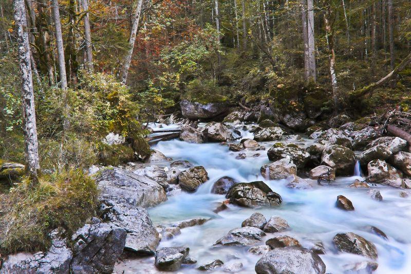 Сказки волшебного лесаphoto preview