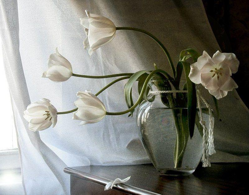 Натюрморт, Фотонатюрморт, Цветы К светуphoto preview