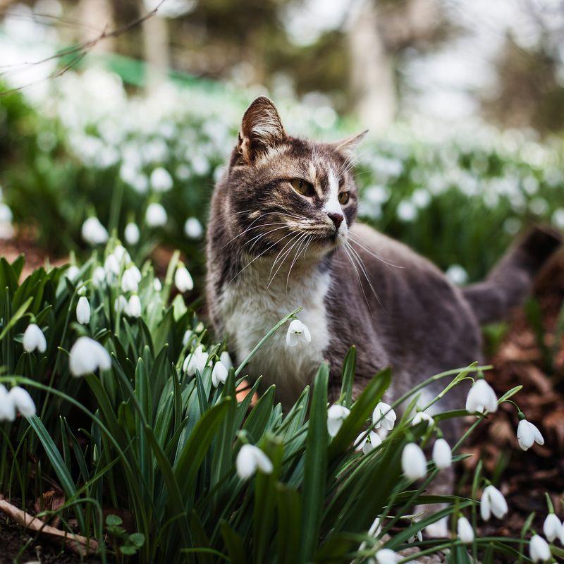 весна подснежники котики Весна пришла!photo preview