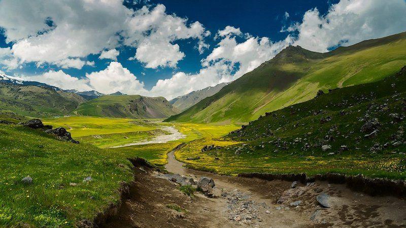 Горные цветы, Горы, Долина, Кавказ, Кавказ приэльбрусье горы пейзаж, Пейзаж, Приэльбрусье Так цветут горыphoto preview