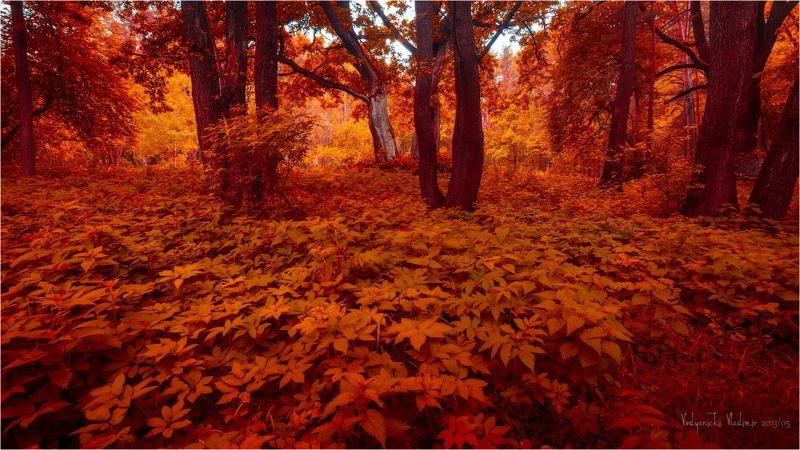 Деревья, Дрозды, Красный, Минск, Парк Охраphoto preview