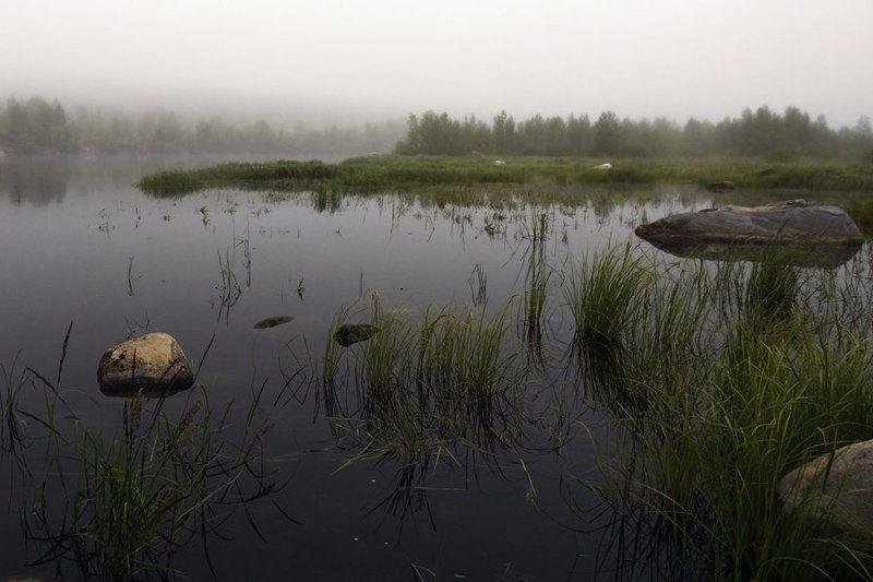 пейзаж,лето,север,река Утро туманное... р.Ниваphoto preview