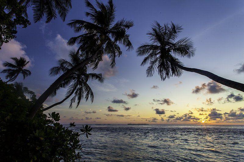 Закат, Индийский океан, Мальдивы, Пальмы, Цейлон, Шри-ланка Где-то в раю...photo preview