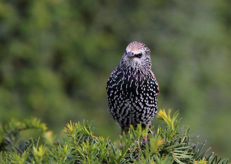 птицы, фотоохота, животный мир, лондон, англия Важные птицыphoto preview