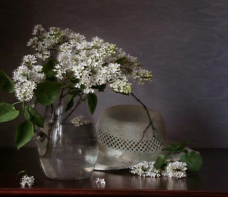 Белая сирень, Весна, Натюрморт, Сирень, Фотонатюрморт Шляпаphoto preview