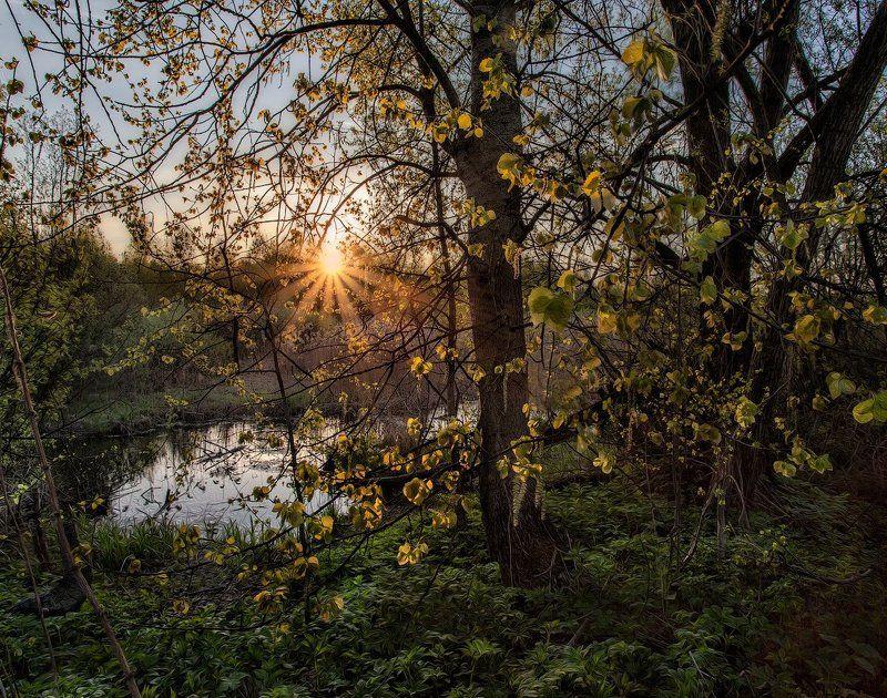 Подмосковье, весна, Купавна Первые фонарикиphoto preview