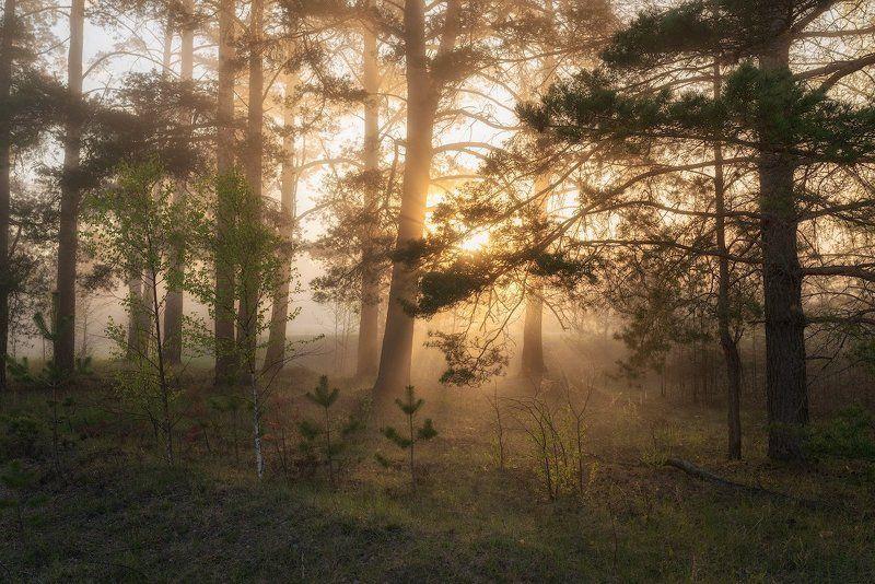Очарование утреннего лесаphoto preview