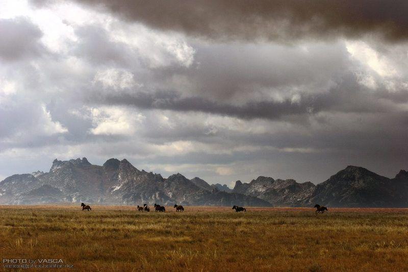 природа, Казахстан, Лошади Аркатphoto preview