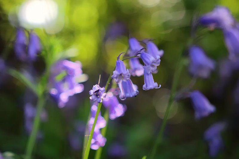 Акварель весныphoto preview