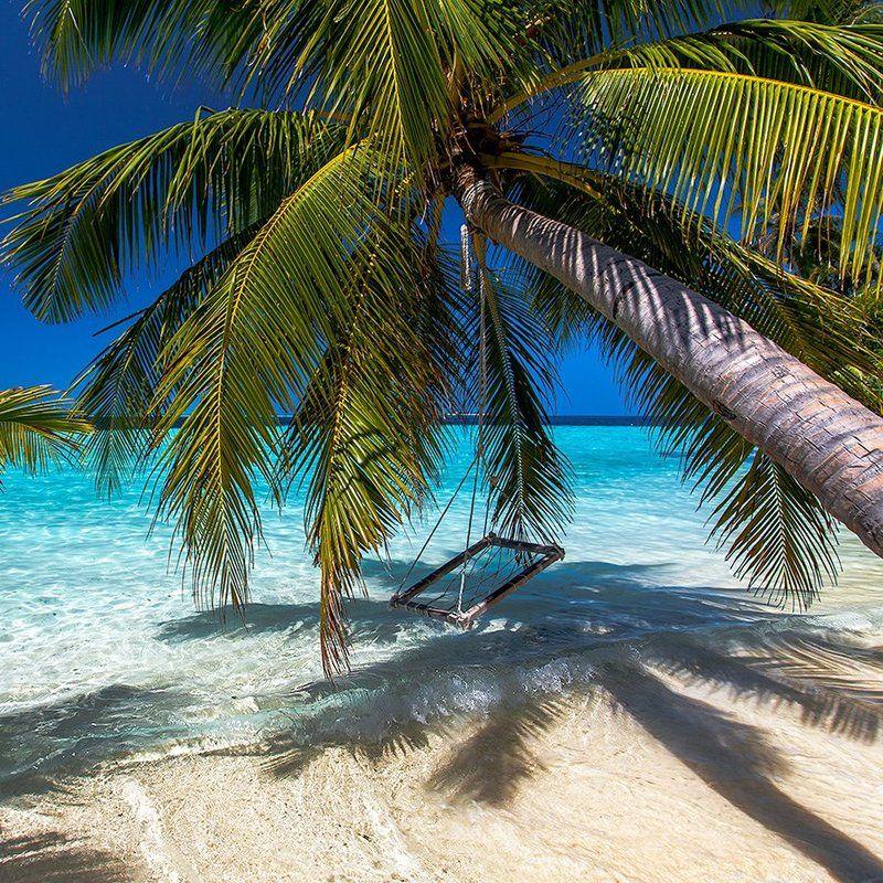 Индийский океан, Мальдивы, Отдых, Пальма, Пальмы, Тропики, Шри-ланка, Экзотика Баунтиphoto preview