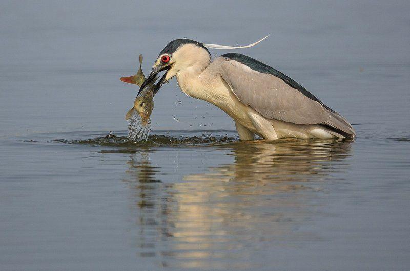 Удачная рыбалка!photo preview