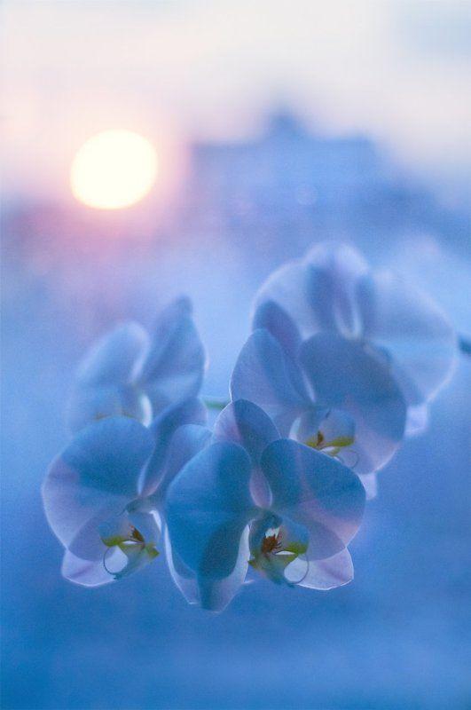 Город, Дома, Закат, Окно, Орхидея Закат за окном на фоне орхидеиphoto preview