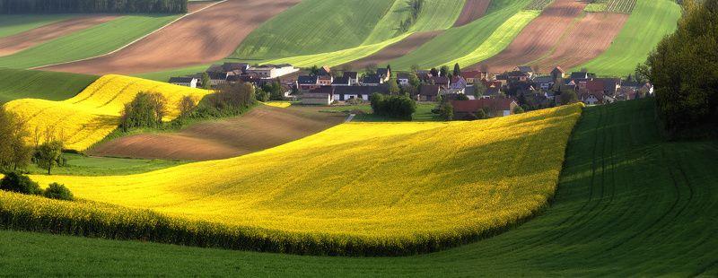 Как австрийцы золото выращивают )photo preview