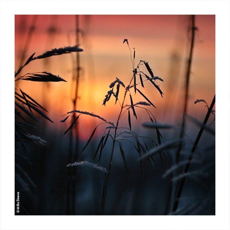 зима, закат, травы, луг, поле зимаphoto preview