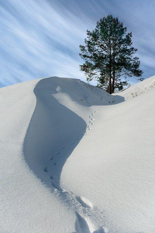 Снежные зарисовки. (1)photo preview