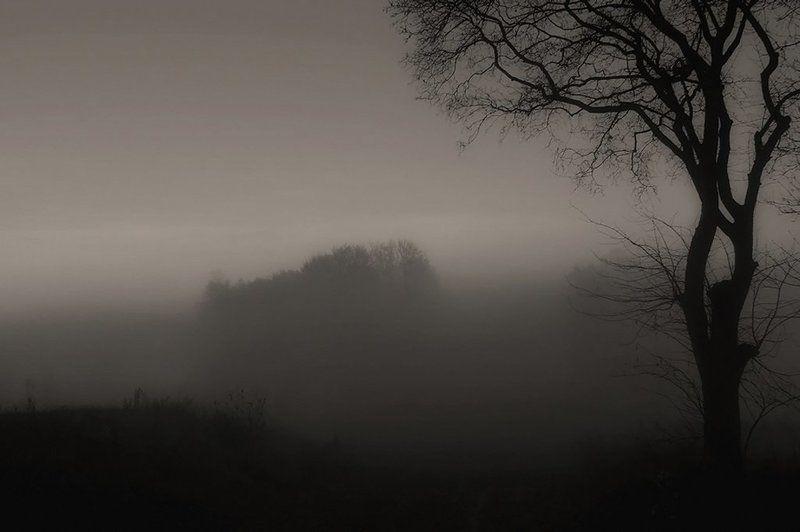 природа,туман Туман вокруг всё поглотил...photo preview