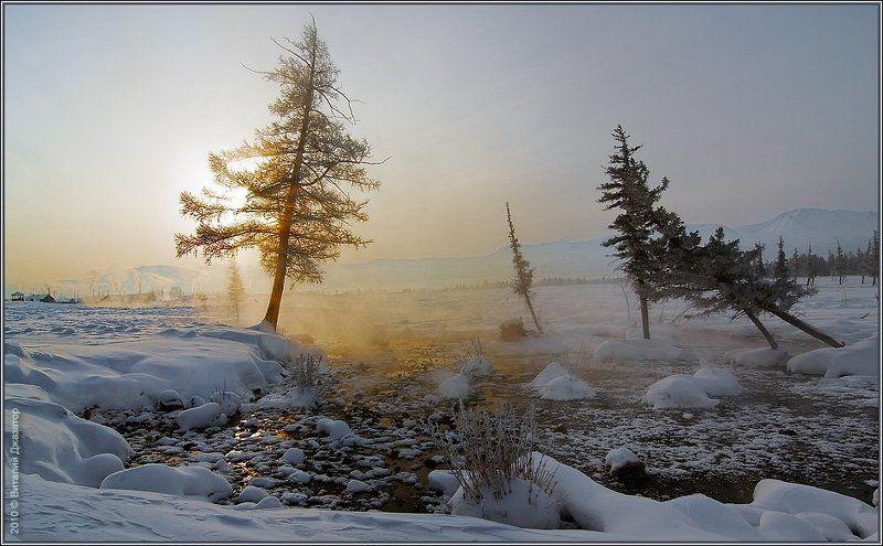 http://altai-photo.ru/ Курай золотойphoto preview