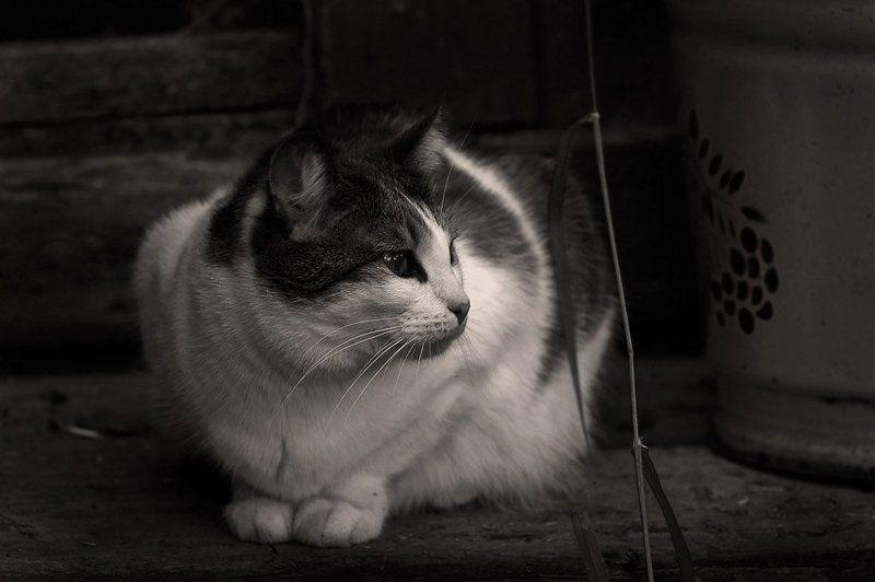 кошки дача джульетта джулька жук Тихонько ёкнуло сердечко: Ведёрко.. Джулька на крылечке.. Трава ершится возле ног... Был просто чудный вечерок..photo preview