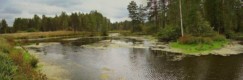 осень, урал, болото, лес, река, панорама, пейзаж, природа Осеннее болотцеphoto preview