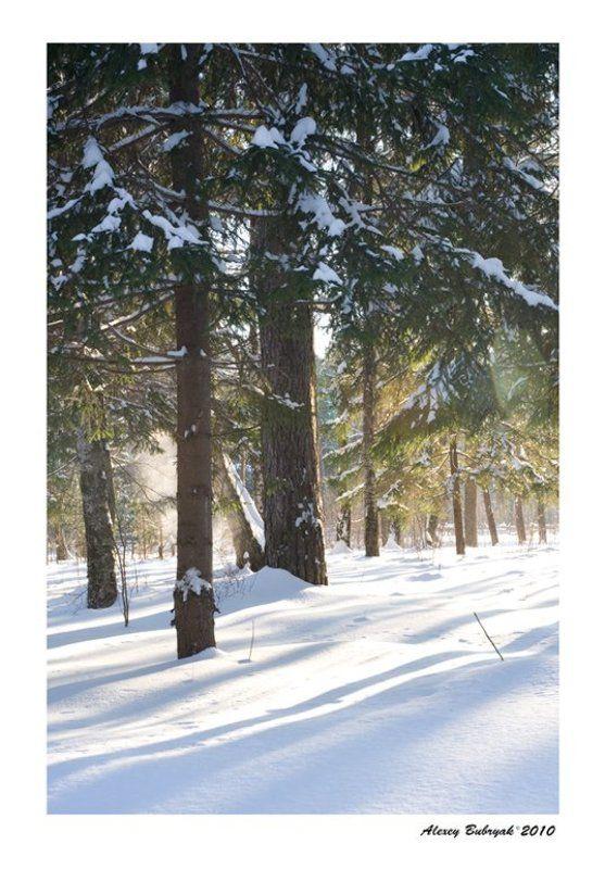 лес, зима, россия, север photo preview