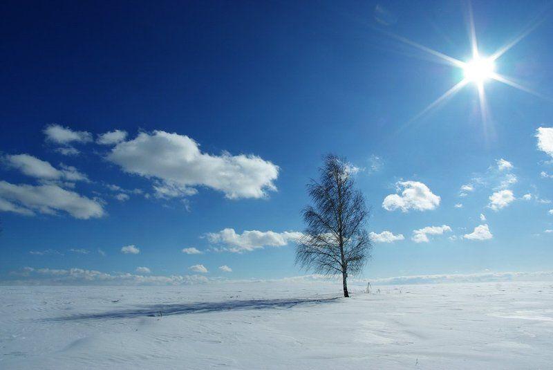 зима, дерево, солнце Лаконичностьphoto preview