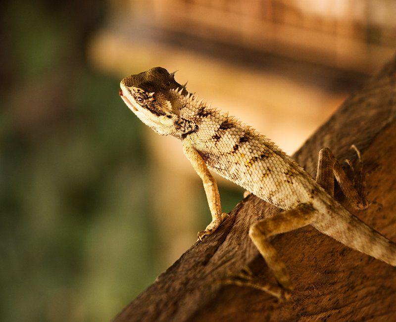 ящерица наблюдательphoto preview