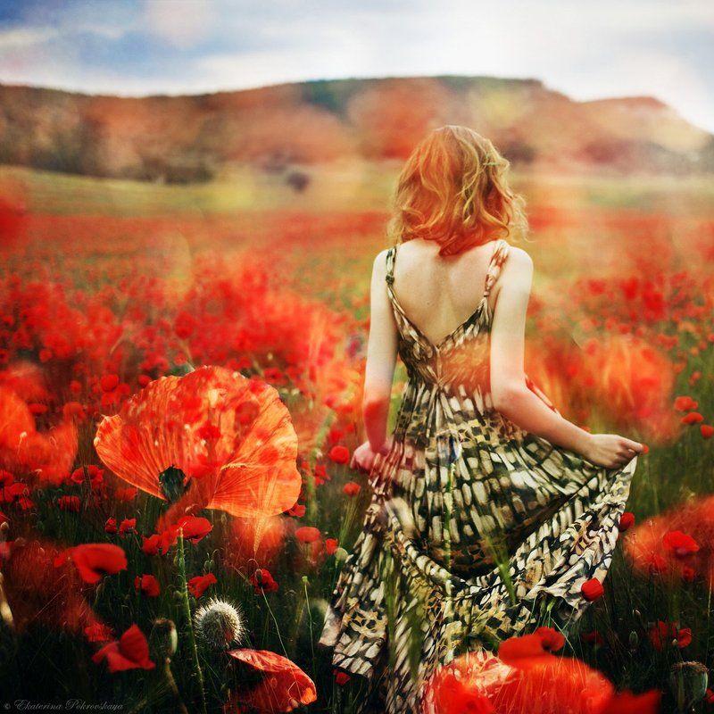 Крым маки весна цветочные историиphoto preview