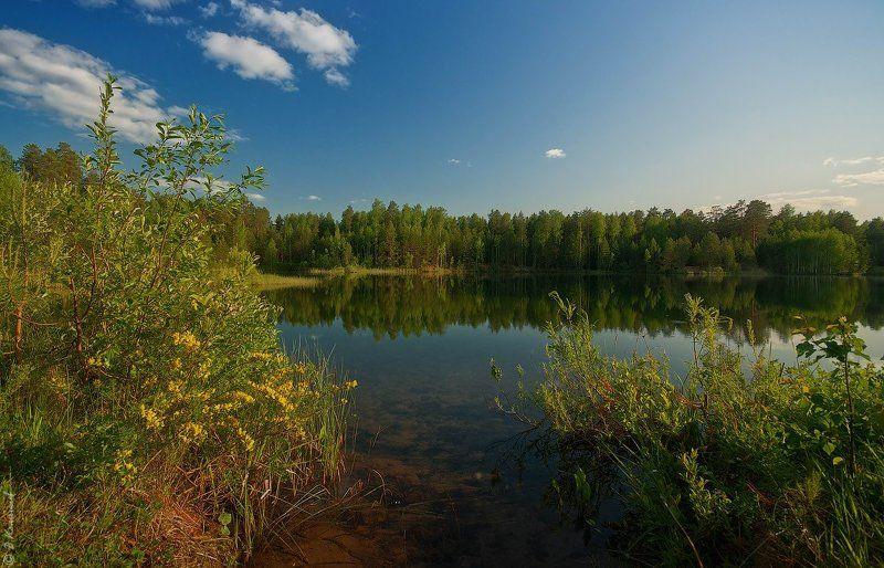 Лес, Лето, Озеро, Пейзаж, Природа Ноктюрн лета...photo preview