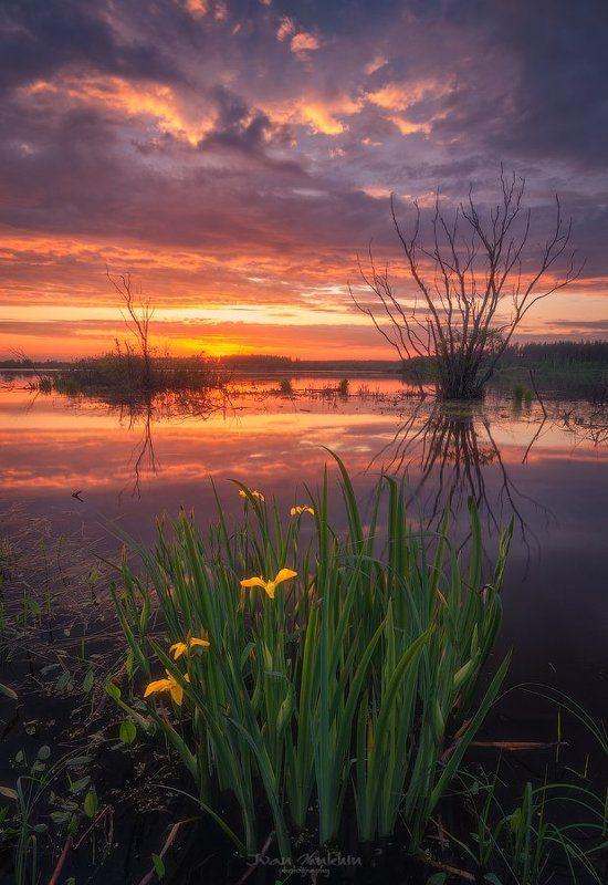 россия, подмосковье, весна, закат,озеро, цветы, пламя, небо, огонь, облака, солнце В вечернем огнеphoto preview