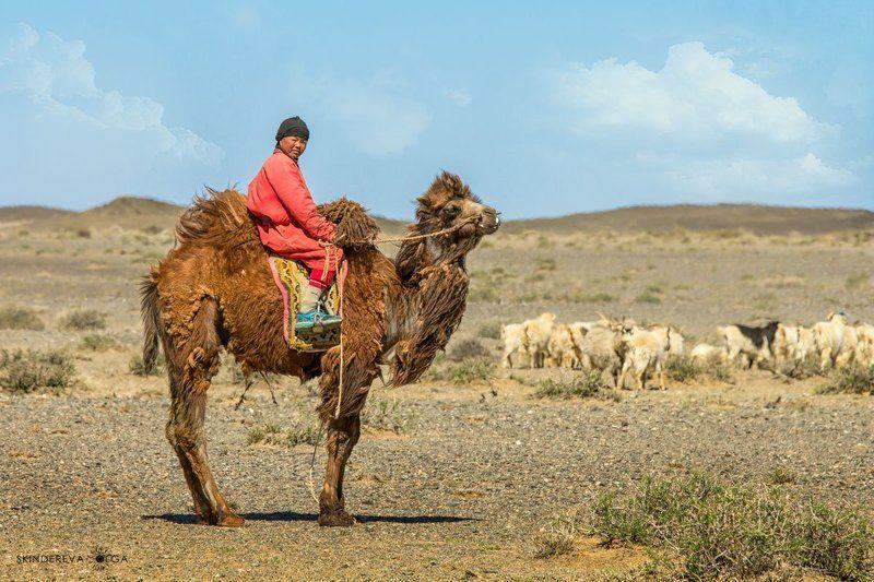 Монголия Любопытный пастухphoto preview